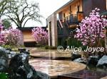 Bardessono Magnolias Photo © Alice Joyce