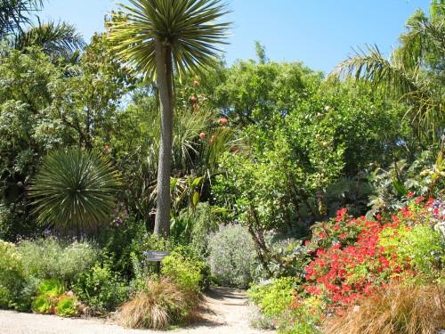 Native Plants San Francisco Botanical Garden Golden Gate Park Alice 39 S Garden Travel Buzz