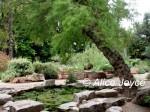 Valencia Botanical Garden Photo © Alice Joyce