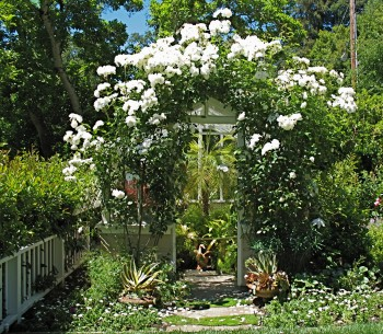 Rose-draped Greenhouse (Alice Joyce photo)