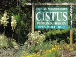 Cistus (Photo: