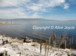Salton Sea Photo - Photo © Alice Joyce