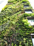 Athenaeum Blanc Vertical Garden detail Photo © Alice Joyce