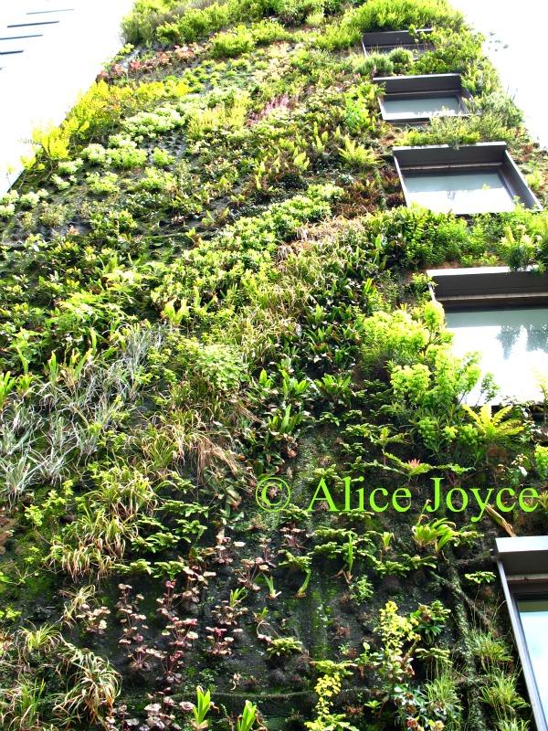 Aliceu0027s Garden Travel Buzz