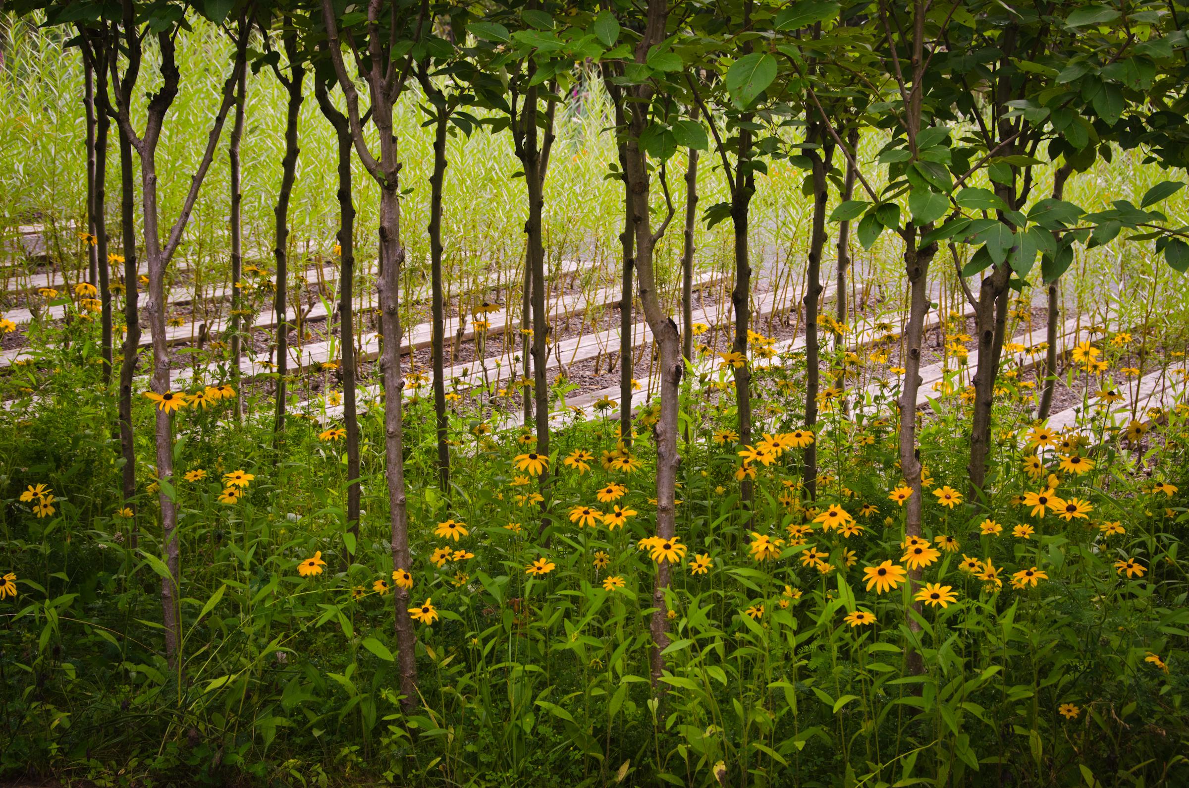 Jardin de m tis 2011 international festival of gardens for Garden jardin