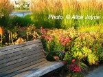 Portland South Waterfront Park Photo © Alice Joyce